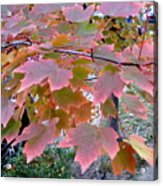 Autumn Pink 2 Acrylic Print