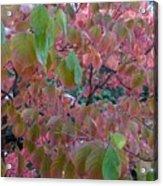 Autumn Pink Poster Acrylic Print