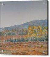 Autumn Poplars Acrylic Print