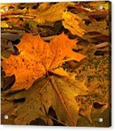 Autumn Quilt Acrylic Print