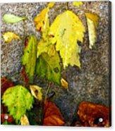 Autumn Rainbow Acrylic Print