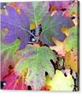 Autumn Rainbows Acrylic Print