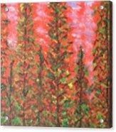 Autumn Vivaldi Acrylic Print