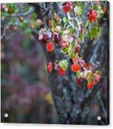 Autumn Red Acrylic Print