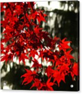 Autumn Red Acrylic Print by Jeff Breiman