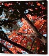 Autumn Red Trees 2015 02 Acrylic Print