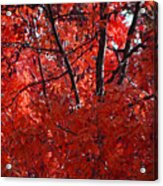 Autumn Red Trees 2015 Acrylic Print