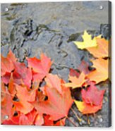 Autumn River Landscape Red Fall Leaves Acrylic Print