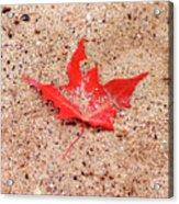 Autumn Sand Acrylic Print