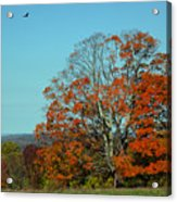 Autumn Scene 2 Acrylic Print