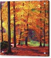 Autumn Serenity Acrylic Print by David Lloyd Glover