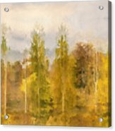Autumn Shear Poplars Acrylic Print