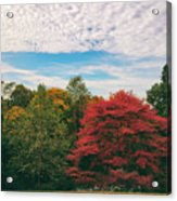 Autumn Skies Acrylic Print