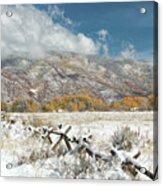 Autumn Snowfall In Aspen Acrylic Print