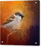 Autumn Sparrow Acrylic Print
