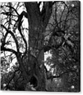 Autumn Spook In Black And White Acrylic Print