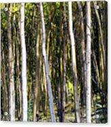 Autumn Stand Acrylic Print