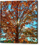 Autumn Star- Paint Acrylic Print