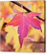 Autumn Still Acrylic Print