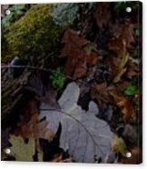 Autumn Still-life Acrylic Print