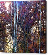 Autumn Sunlight Acrylic Print