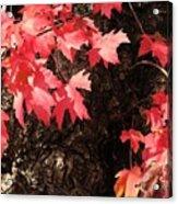 Autumn Surprise Acrylic Print