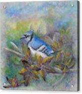 Autumn Sweet Gum With Blue Jay Acrylic Print