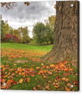 Autumn Tale Acrylic Print