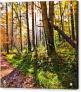 Autumn Trail Acrylic Print by Debra and Dave Vanderlaan