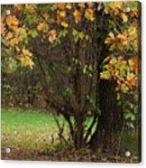 Autumn Tree 2 Acrylic Print