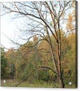 Autumn Tree At Sunset Light Acrylic Print