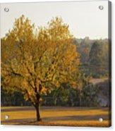 Autumn Tree At Sunset Acrylic Print