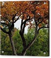 Autumn Tree II Acrylic Print