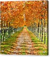 Autumn Tree Acrylic Print by Julien Fourniol/Baloulumix