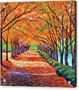 Autumn Tree Lane Acrylic Print