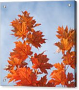 Autumn Tree Leaves Art Prints Blue Sky White Clouds Acrylic Print
