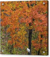 Autumn Tree Acrylic Print