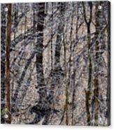 Autumn Trees 1 Acrylic Print