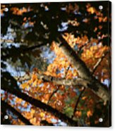Autumn Trees 2015 Pa 01 Acrylic Print