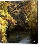 Autumn Trees 3 Acrylic Print