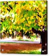 Autumn Trees 6 Acrylic Print