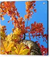 Autumn Trees Artwork Fall Leaves Blue Sky Baslee Troutman Acrylic Print