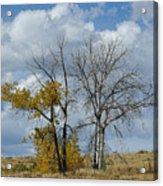 Autumn Trees II Acrylic Print