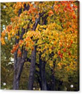 Autumn Trees In Park Acrylic Print