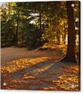 Autumn Trees Near Lake Acrylic Print