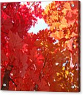 Autumn Trees Red Orange Fall Trees Art Baslee Troutman Acrylic Print
