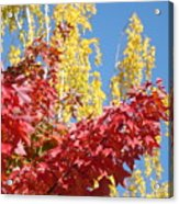 Autumn Trees Red Yellow Fall Tree Blue Sky Landsape Acrylic Print