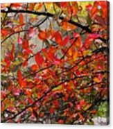 Autumn Trees Rock City Acrylic Print
