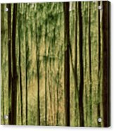 Autumn Trees, Scottish Borders Acrylic Print