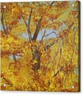 Autumn Treetops Acrylic Print